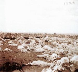Vee dood gemaak - Anglo Boere Oorlog
